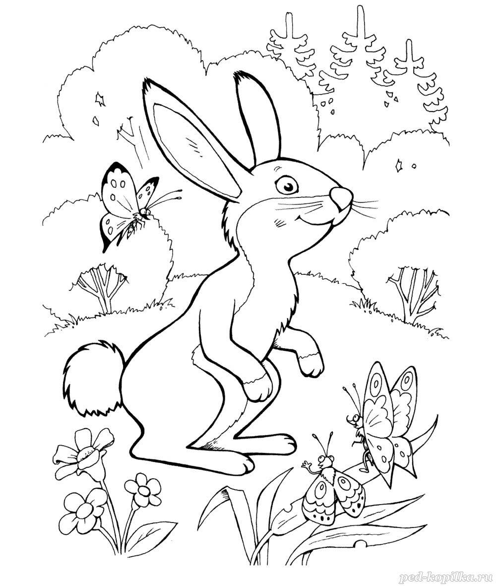 раскраска для детей зайчик