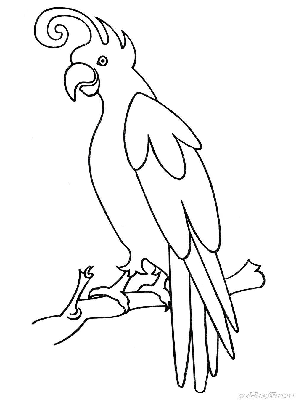 раскраска для детей попугай