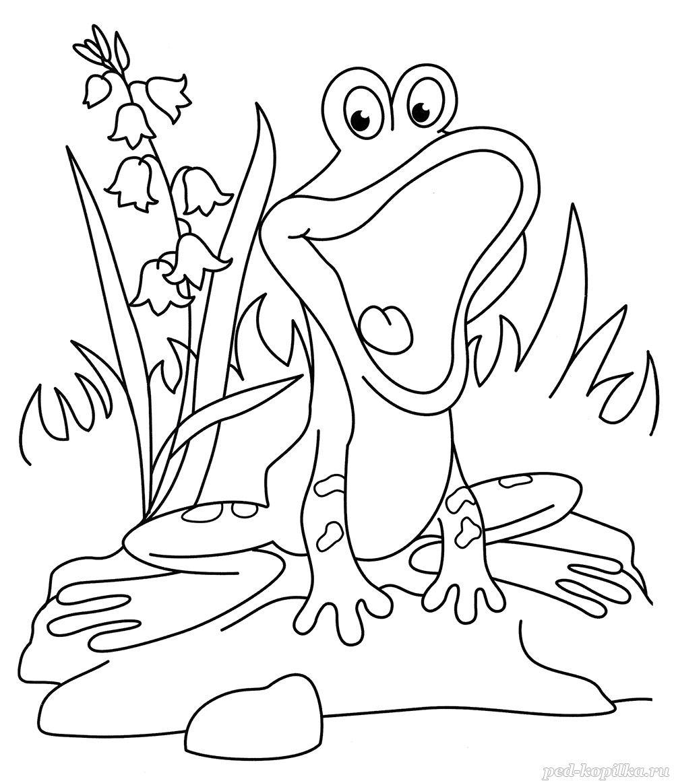раскраска для детей 4 5 лет лягушонок на пруду