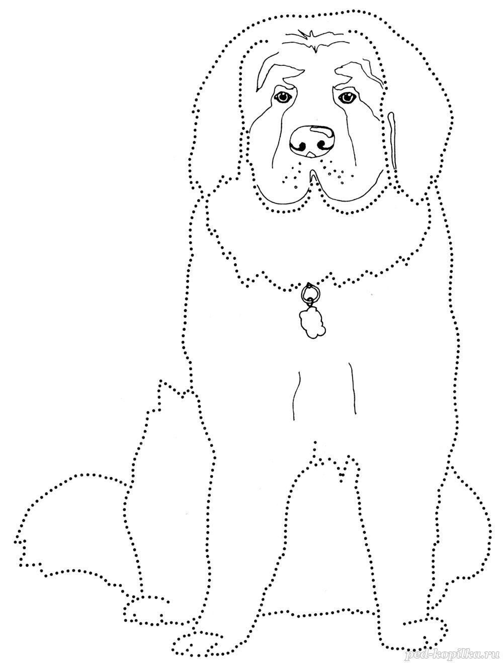 картинка по точкам собачка