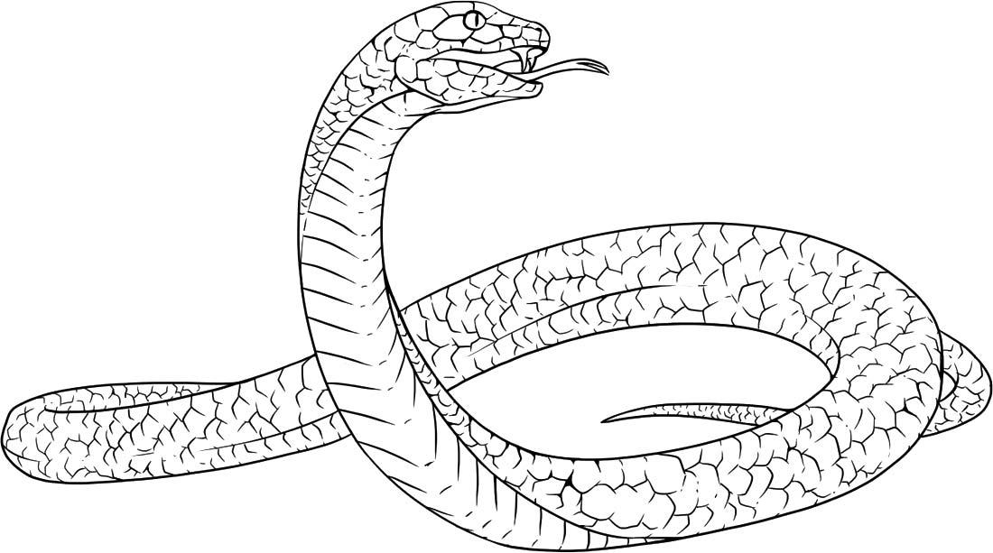 привычному распечатать картинки змей перекрашивал модель, клеил