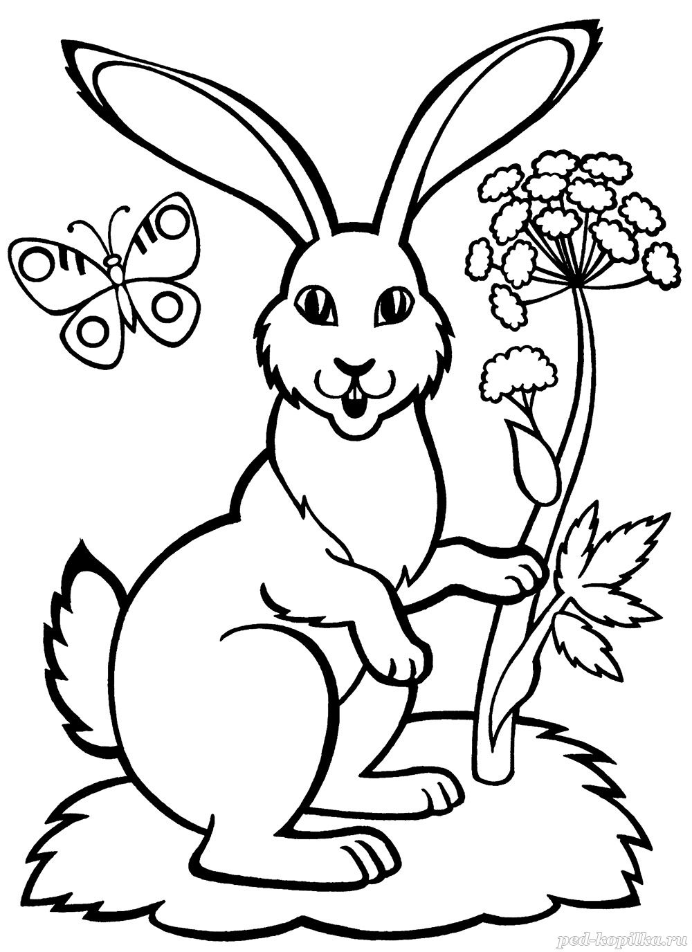 раскраска заяц на лесной полянке