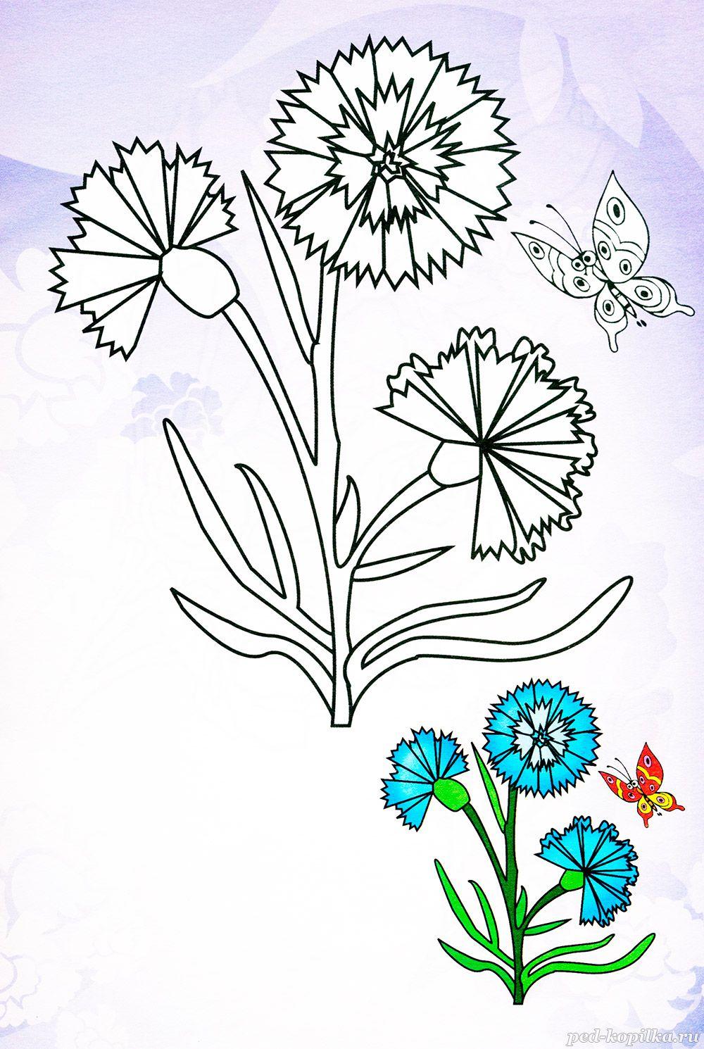 безобидными картинки для раскрашивания цветов василек важно избавиться