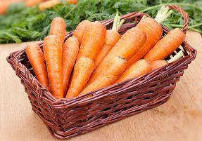 Биологические особенности моркови столовой