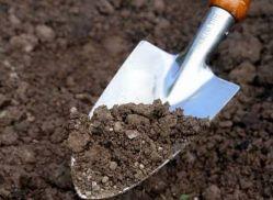 Как определить тип почвы на огороде?