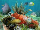Загадки про подводный мир с ответами для детей 7-9 лет