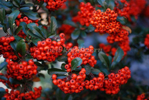 10705_40e60d055c723ab44f6ebaadb8f5004a.jpg Рябина квиллинг: осеннее дерево из бумаги в фото МК