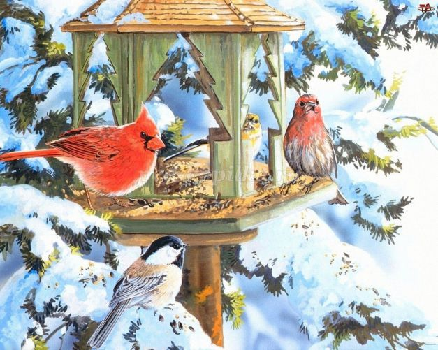 Папка-передвижка Покормите птиц зимой! | 501x627