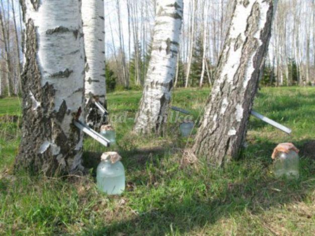 Расскажите детям о деревьях. Пособие для детей 4-6 лет.