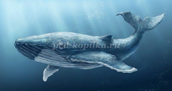 Датские ученые раскодировали язык китов | 319x600