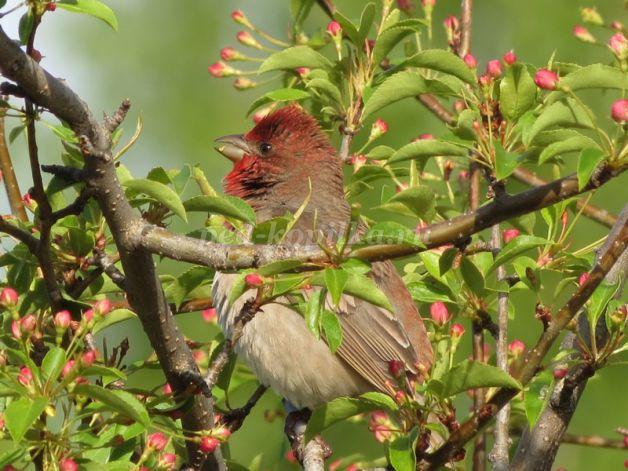 В лесу запели птицы основными признаками абстинентного синдрома являются