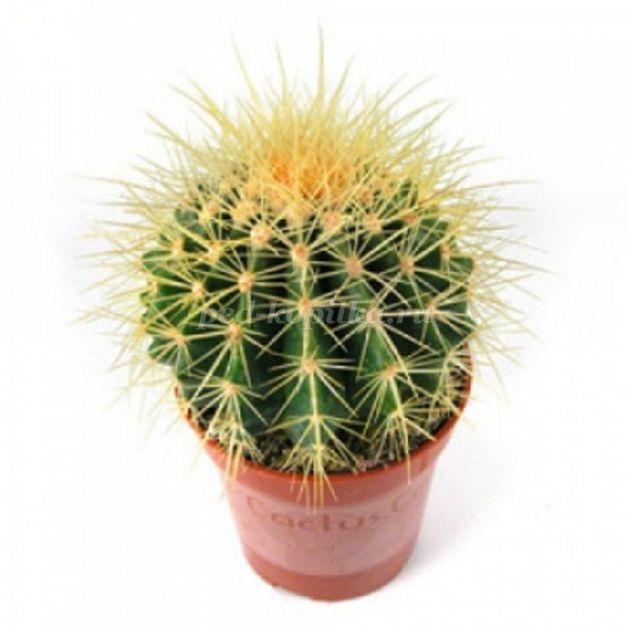 Комнатные растения для детей
