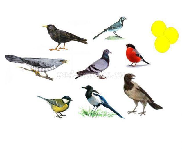 Викторина для детей подготовительной группы «Перелётные птицы»