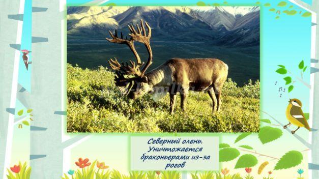 Конспект НОД в старшей группе с использованием ИКТ. Редкие животные Урала