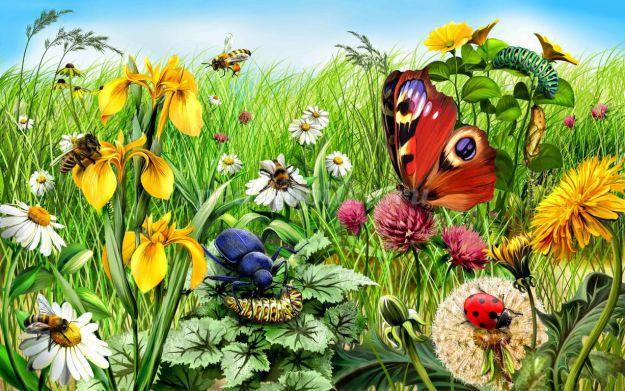 Интересные факты о насекомых для детей в детском саду